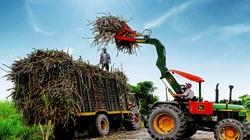 Cơ hội xuất khẩu của ngành mía đường Việt Nam
