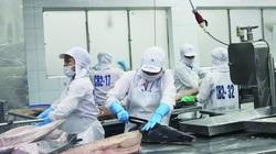 Xuất khẩu cá ngừ chế biến tăng đột biến