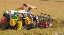 Lúa sinh thái Cà Mau được cấp giấy chứng nhận đăng ký nhãn hiệu
