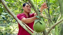 Nông nghiệp an toàn vừa giảm chi phí vừa dễ bán