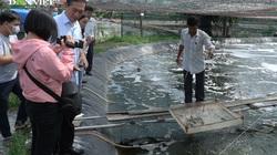 Nuôi tôm công nghệ cao nông dân Đồng Nai vẫn thu tiền tỷ giữa mùa dịch Covid - 19