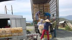 Giá gia cầm hôm nay 28/9: Giá gà thịt công nghiệp tiếp tục tăng, người nuôi lãi đậm