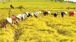 Đối mặt Covid-19, xâm nhập mặt, ngành Nông nghiệp vượt khó