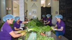 Long An: Đưa rau húng, rau cải về trồng kiểu công nghệ cao, thu hoạch liên tục có tiền đều tay