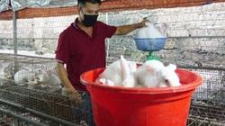 """Thái Nguyên: Ông nông dân """"chỉ huy"""" 4.000 con tai dài, lông trắng muốt, thu đều tay 200 triệu đồng/năm"""