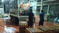 Giá gia cầm hôm nay 4/9: Vịt thịt miền Nam giá cao, giật mình có nơi thịt gà thả vườn giá tới 330.000 đồng/kg