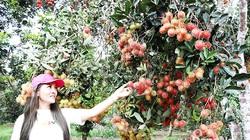Những vườn trái cây ngon bạc tỷ