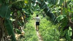 """Bắt """"yêu râu xanh"""" hiếp dâm bé gái 12 tuổi trong vườn chuối ở Hà Nội"""