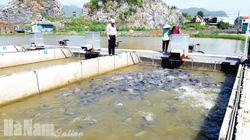 """Thu nước trên núi Bút Sơn, làm """"sông trong ao"""" nuôi cá, đàn cá nhung nhúc lớn như thổi, bán đắt hàng"""