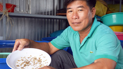 Cà Mau: Cả làng khá giả, nhà nào cũng ăn nên làm ra nhờ nuôi thứ cua giống tí hon