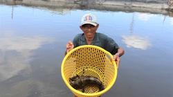 Ông nông dân này nuôi loài cá đặc sản gì mà cứ bán 1 con là lời hẳn 150.000 đồng?