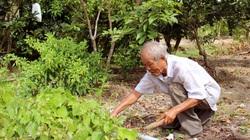"""Cà Mau: Nguyên Bí thư tỉnh đoàn thu nửa tỷ mỗi năm từ khu du lịch mi ni trồng đủ thứ, nuôi """"lung tung"""""""