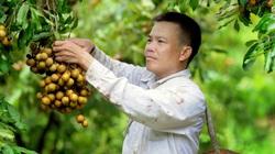 Trồng cây ăn quả trên đất dốc, lão nông lãi trên 200 triệu mỗi năm