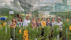 TP HCM: Trồng hoa lan cắt cành màu sắc mới lạ, đất chật nhưng nông dân ven đô vẫn kiếm bộn tiền