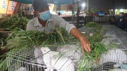 Thu nhập cao từ nuôi thỏ thương phẩm