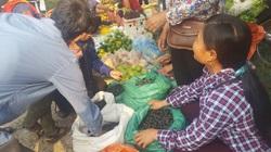 Lạng Sơn: Thứ cây to như cột đình, ra quả đen sì, bán đắt tiền mà dân vẫn săn lùng tìm mua