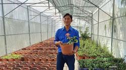 Tiền Giang: Anh nông dân trẻ bất ngờ thu 10 tỷ đồng nhờ trồng sâm quý trong chậu