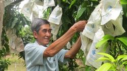 Sau vụ Trung Quốc tạm dừng nhập khẩu xoài: Bộ Nông nghiệp chỉ đạo gì?