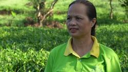 Nữ nông dân Thái Nguyên xây dựng thương hiệu chè nổi tiếng, giá tới 5 triệu/kg
