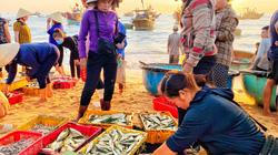 """Quảng Bình: Mặt trời chưa mọc tha hồ chọn tôm, cá tươi roi rói, nhảy tanh tách ở chợ """"làng không ngủ"""""""