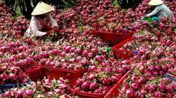 Trung Quốc tăng tốc nhập khẩu sầu riêng, sao xuất khẩu sầu riêng Việt Nam vẫn giảm?