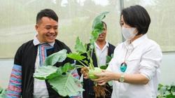 Sơn La: Dân nghèo miền núi tăng thu nhập 200% nhờ dự án Sinh kế cộng đồng