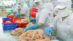 Xuất nhập khẩu Việt Nam 2020 ấn tượng qua 1 năm vượt khó