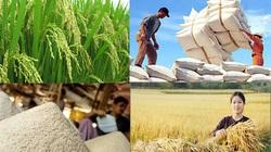 Giá nông sản hôm nay (1/1): Ngày đầu năm 2021 lúa gạo tiếp tục neo ở mức cao, lợn hơi tăng mạnh
