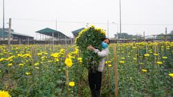 Hà Nội: Trời rét căm căm dưới 10 độ C, người dân Tây Tựu tất bật chăm sóc hoa bán Tết