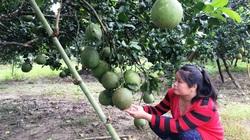 Hội Nông dân Khánh Hòa: Xây dựng, nhân rộng nhiều mô hình sản xuất nông nghiệp giúp nông dân làm giàu