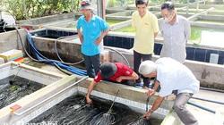 Đồng Nai: Nuôi lươn không bùn trong bể xi măng, bán lươn to bự 220.000 đồng/ký, nhà nào nuôi nhà đó khá giả