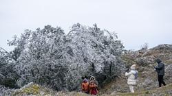ẢNH: Khoảnh khắc băng giá đọng trên cây ngày rét 0 độ C