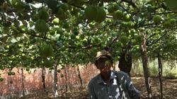 Ninh Thuận: Nông dân có thu nhập đáng kể nhờ triển khai mô hình nông nghiệp