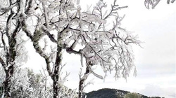 Ảnh: Lạnh âm độ, băng tuyết phủ trắng trên đỉnh núi Tà Xùa