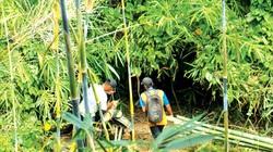 Đáng ngại, ầm ầm chặt cây lồ ô trái phép trong rừng tỉnh Bình Thuận, tiếng bốp vang lên cây đổ xuống