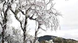 Lo ngại: Không khí lạnh tiếp tục tăng cường, vùng núi cao phủ trắng tuyết, băng giá
