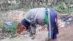 Quảng Trị: Chua xót một xã có hơn 80 con trâu, bò bị chết vì quá lạnh