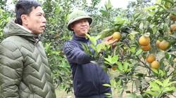 Huy Tân: Tập trung thực hiện tiêu chí thu nhập trong xây dựng nông thôn mới