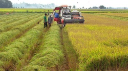 Cán bộ, công chức có được đứng tên đất nông nghiệp theo Luật mới?