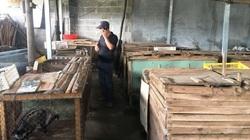 Giá chồn hương cao nhất 1,8 triệu đồng/kg, nhiều người dân Khánh Hòa muốn đầu tư nuôi bán
