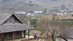 Sơn La đề nghị Bộ NNPTNT hướng dẫn xác nhận cây đào trồng trên vườn nhà như thế nào?