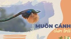 """Ra mắt cuốn sách """"Các loài chim Việt Nam"""""""
