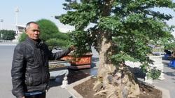 """Hải Dương: Lão nông sở hữu """"cụ"""" cây 100 năm tuổi, làm được cả thuốc, khách trả 250 triệu chưa bán"""