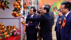 Truy xuất được nguồn gốc, cam sành Hà Giang đắt hàng, giá cao hơn hẳn