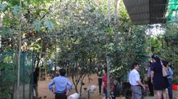 Dịch vụ và du lịch nông nghiệp mang lại 50 tỷ đồng/năm cho Thừa Thiên Huế