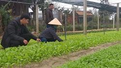 Quảng Bình: Trồng rau an toàn theo cách này, nông dân yên tâm có thu nhập đều đều