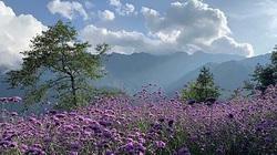 Top 8 địa điểm du lịch Tết với cảnh đẹp và hấp dẫn không thể bỏ qua