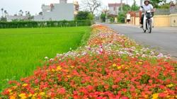 Nam Định: Đến Hải Hậu để tận hưởng về miền quê đáng sống, trù phú và hiện đại