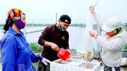 Hải Dương: Con đặc sản nổi tiếng của xã này đã xuất khẩu chính ngạch, dân ai cũng mừng