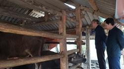 Đôn đốc quyết liệt, giữ yên đàn gia súc qua mùa giá rét